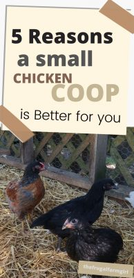 small chicken coop is better