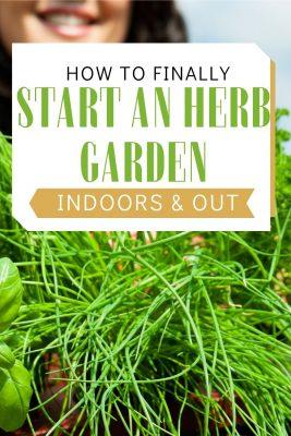 how to start growing an herb garden