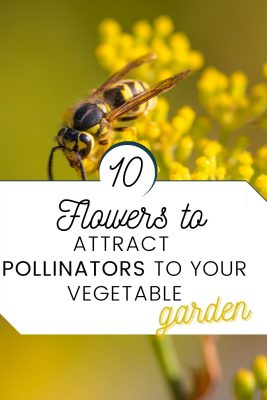pollinator plants food garden