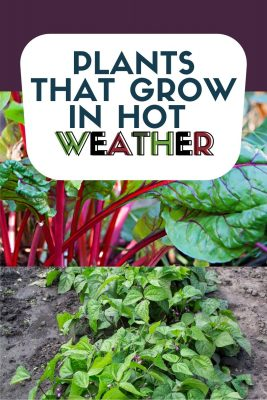 plants that grow in hot weather