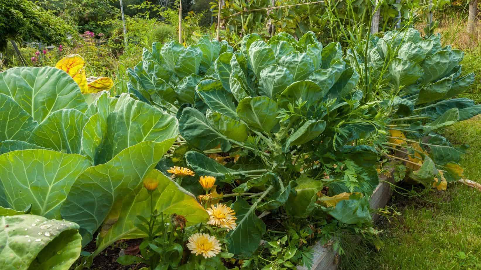 plants in vegetable garden