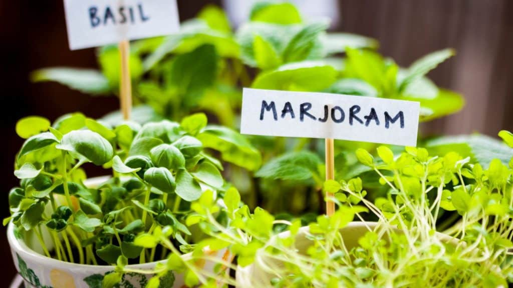 How to Plant Your Herb Garden