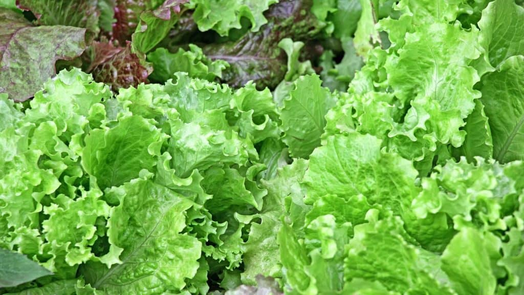 The Best Vegetables to Grow During Winter Months