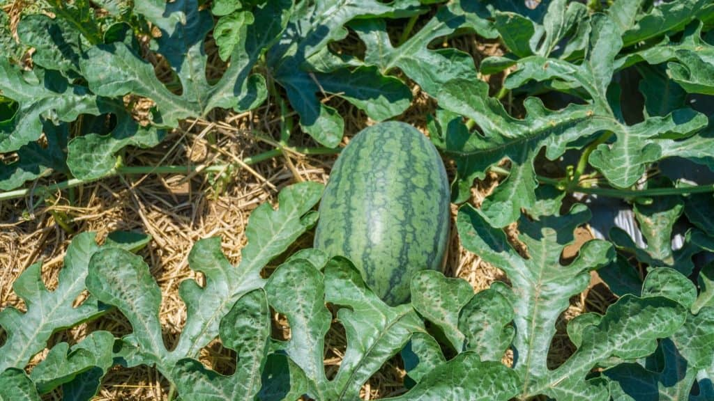 How to Avoid Bland Tasting Food In Your Garden