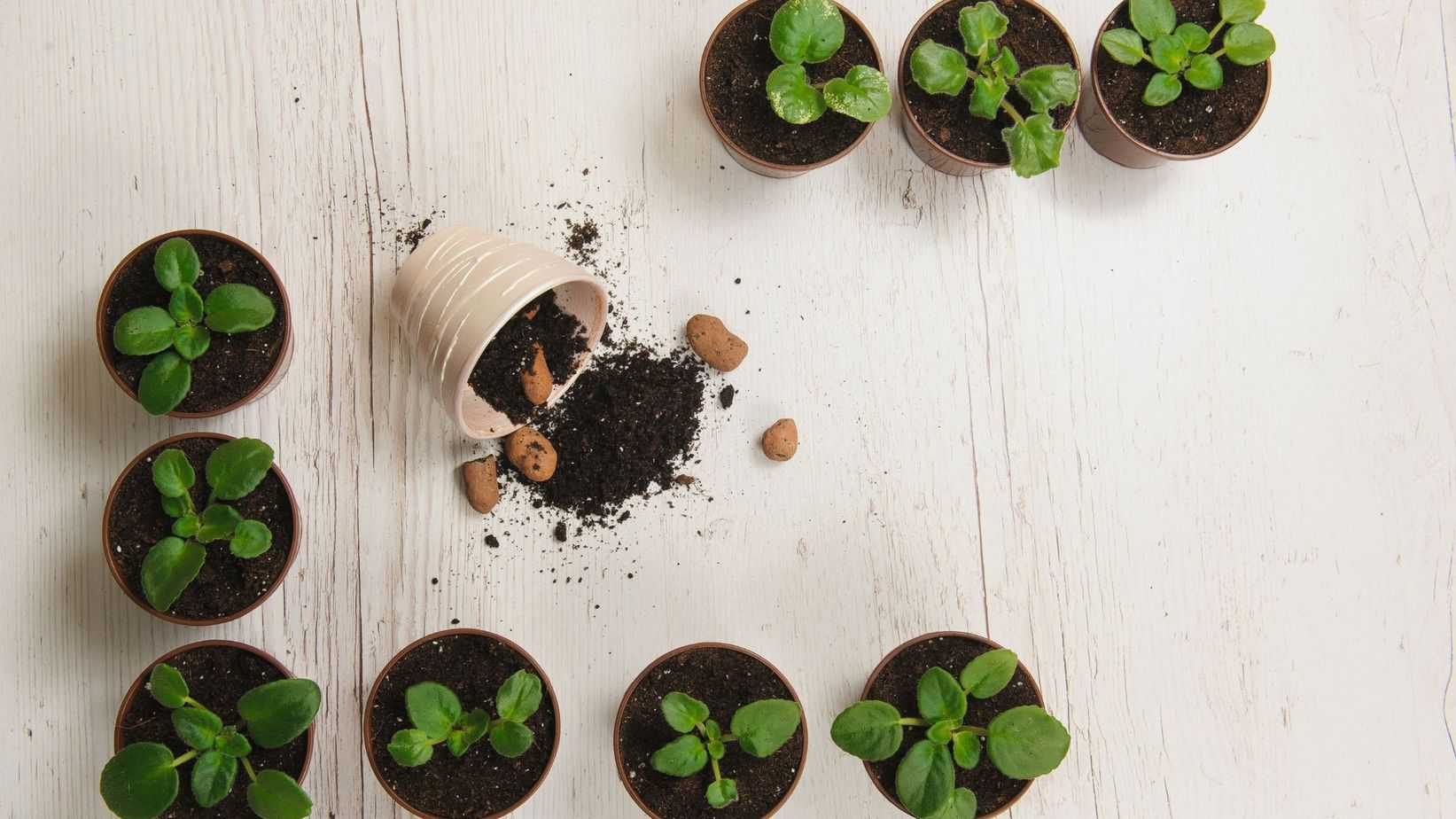 smart gardening gadgets