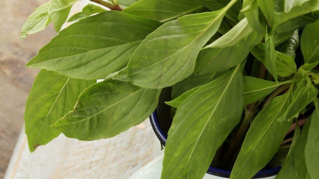 Kid-Friendly Herbs & Herb Garden Kits