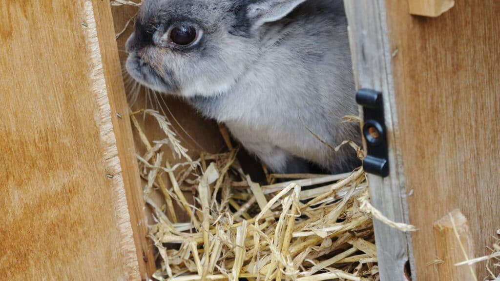 rabbit hutch online and free shipping