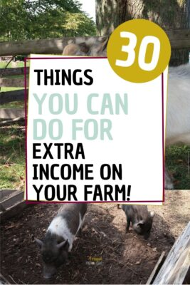 how to make money from a small homestead