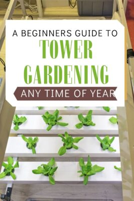 guide to get started with tower gardening